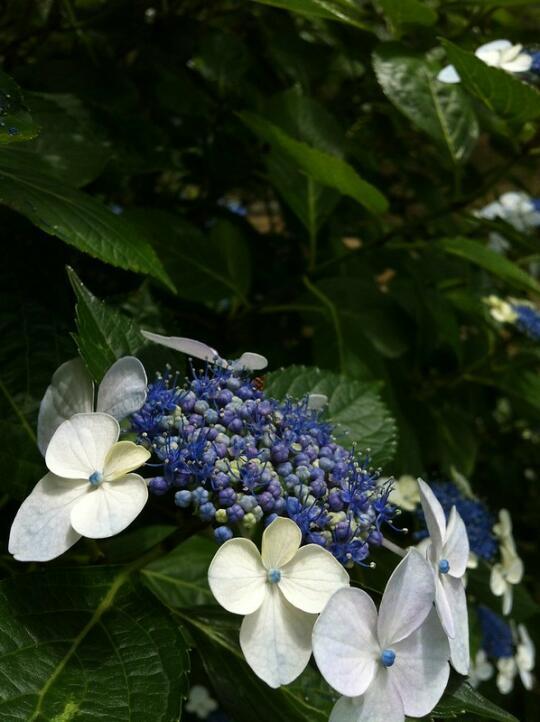 Flowers in Hamarikyu park