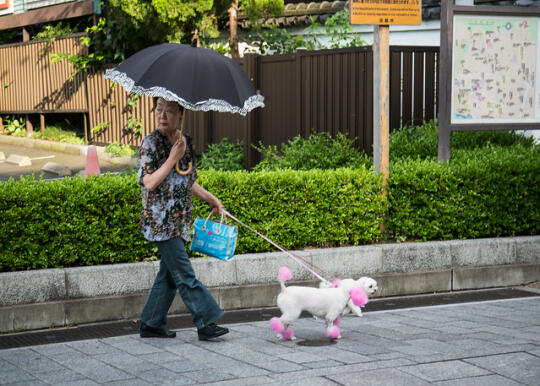 Woman with umbrella and two dogs