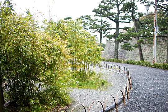 Bamboo in Nijo Castle