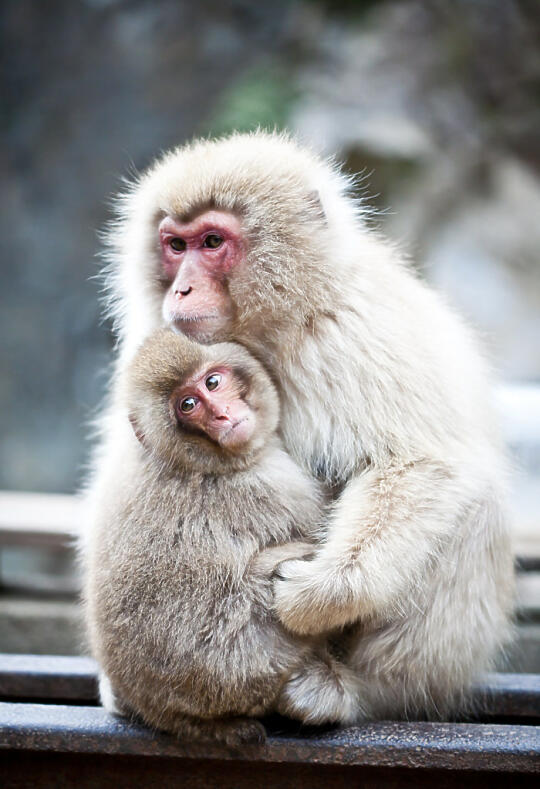 Hugging monkeys