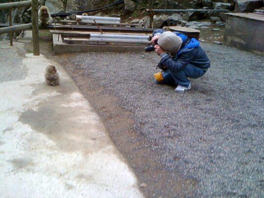 Son taking a picture of the little monkey looking at Son