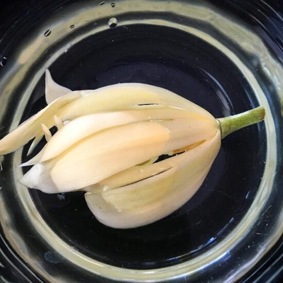 Champaca flower