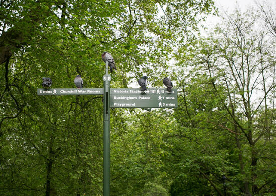 Park near Buckingham Palace